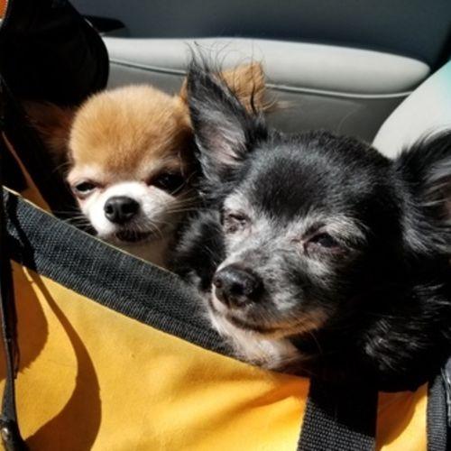 Pet Care Provider Diana H's Profile Picture