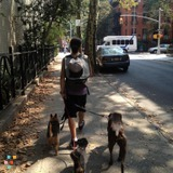Dog Walker, Pet Sitter in Pleasantville