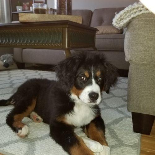 Pet Care Provider Carol M's Profile Picture