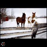 Amazing winter photos!
