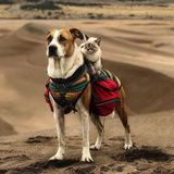 Seasoned Pet Care Sitters in Corpus Christi also servicing Portland and surrounding areas.