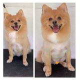 Consistent Groomer, Pet Sitter, Dog Walker in Lake Mary