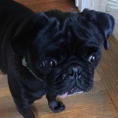 Pet Care Job LIsa D's Profile Picture