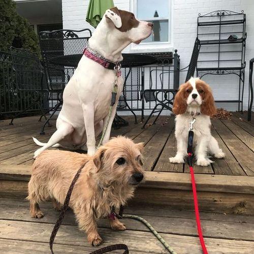 Pet Care Provider Lauren Hammer Gallery Image 2