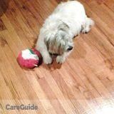 Dog Walker, Pet Sitter in Freehold