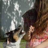 Dog Walker, Pet Sitter in Elmwood Park