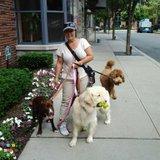 Dog Walker, Pet Sitter, Kennel in Hoboken