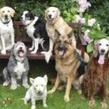 Dog Walker, Pet Sitter in Rogers