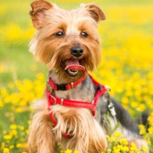 Pet Care Provider Danielle Bogen's Profile Picture