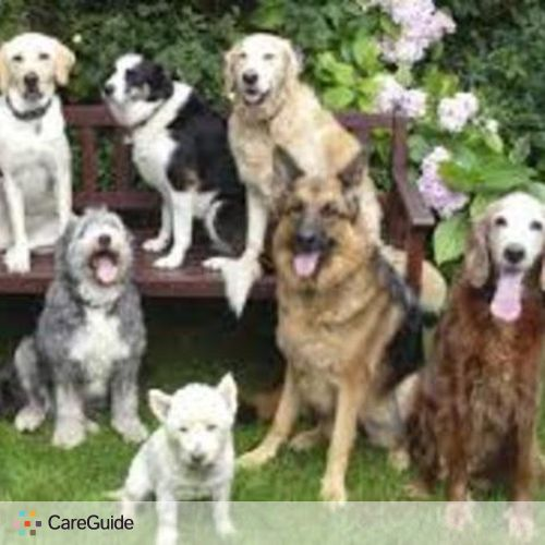 Pet Care Provider Hannah Fox's Profile Picture