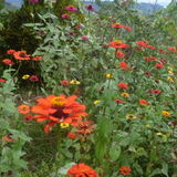 Family, Gardening in Guelph