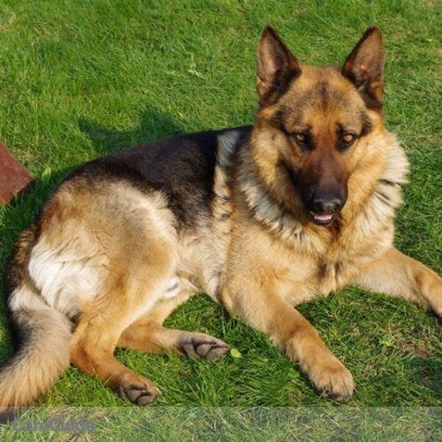 Pet Care Provider Ryan Arruda's Profile Picture