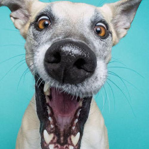 Pet Care Provider Tammy B's Profile Picture