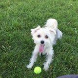 Dog Walker, Pet Sitter in Embrun