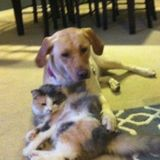 Looking For a Pet Carer Job in Novi, Michigan