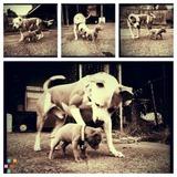 Dog Walker, Pet Sitter in Harrisburg