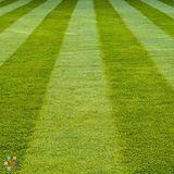 Affordable Lawn Cutting