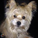 Dog Walker, Pet Sitter in Ottawa