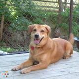 Dog Walker, Pet Sitter in Bay Village