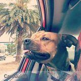 Dog Walker, Pet Sitter in North Miami