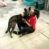 Honest Dog Sitter Available Immediately