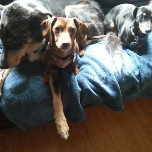 Pet Care Provider Lea J Smith Gallery Image 1