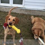 Dog Walker, Pet Sitter in Minot