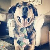 Dog Walker, Pet Sitter in Moncton