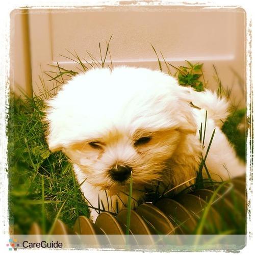 Pet Care Provider Amanda Borrud's Profile Picture