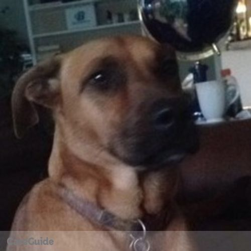 Pet Care Job Benjamin Furst's Profile Picture