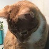 Watch my kitties in my home! Wilmington