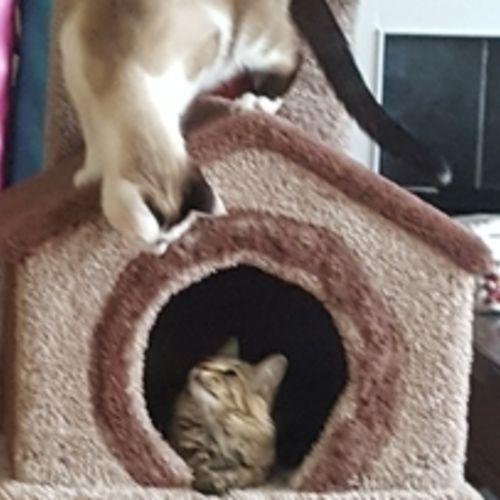 Pet Care Provider Abby Newton's Profile Picture