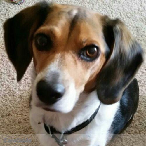 Pet Care Provider Rebecca Maunu's Profile Picture