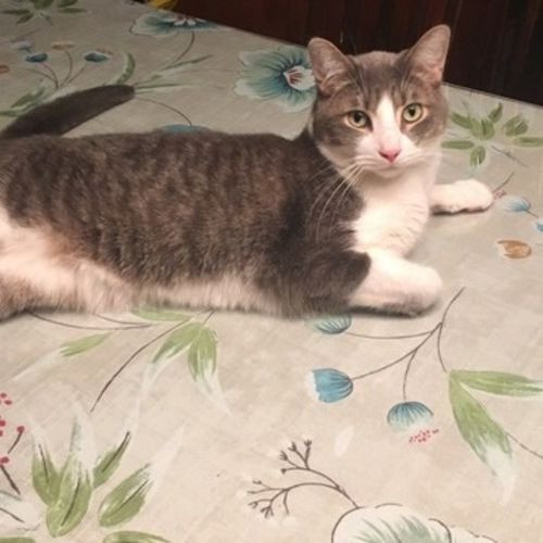 Pet Care Provider Darlene S's Profile Picture