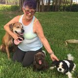 Qualified pet sitter that will love your pet the way you do !