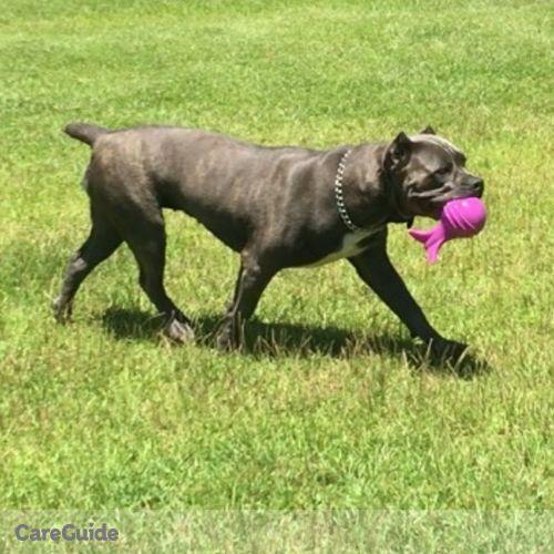 Pet Care Provider Valerie Tucker Bellona Canine Training's Profile Picture