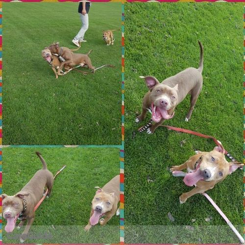 Pet Care Provider Emily Dodman's Profile Picture