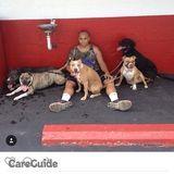 Dog Walker, Pet Sitter in Buffalo