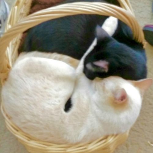 Pet Care Provider Aeryka D Gallery Image 1
