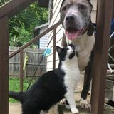 Opportunity for caring pet sitter in Albany NY