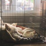 Dog Walker Job, Pet Sitter Job in Ottawa