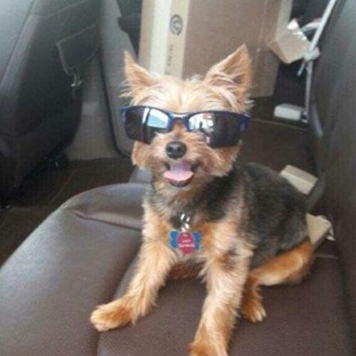 Pet Care Provider Sarah R Gallery Image 2