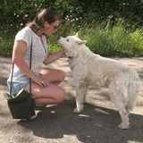 4th Year UVic Student Living in Mill Bay: Experienced dog walker/sitter!