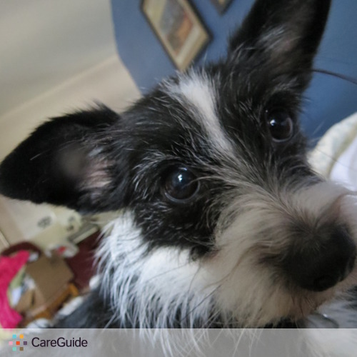 Pet Care Job Cindy Whittenbury's Profile Picture