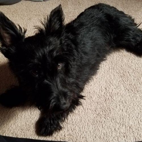 Pet Care Job Abigail A's Profile Picture