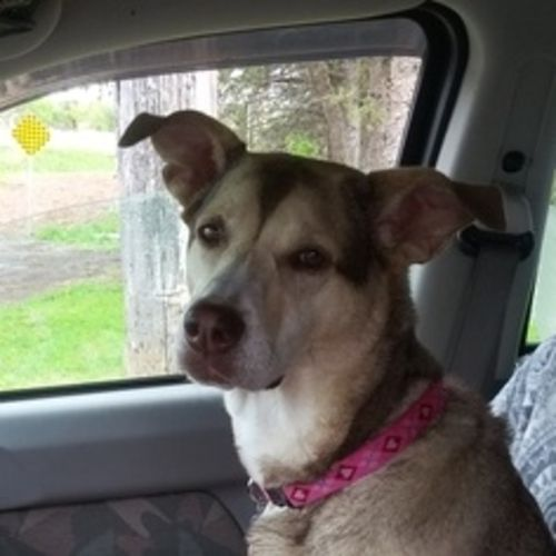 Pet Care Provider Megan G's Profile Picture
