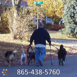 Dog Walker in Knoxville