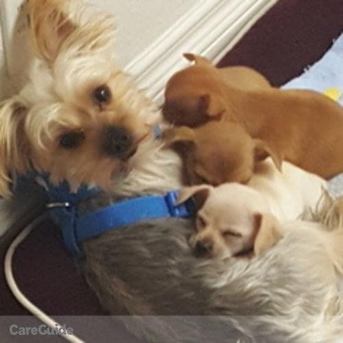 Pet Care Provider Paris Falloon's Profile Picture