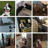 Dog Walker, Pet Sitter, Kennel in Billings