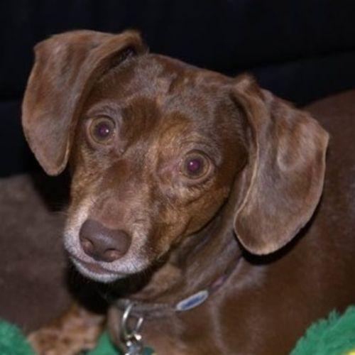 Pet Care Provider Lea J Smith Gallery Image 2